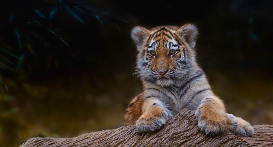 Little man - very large ;-) by Sonja Probst on 500px