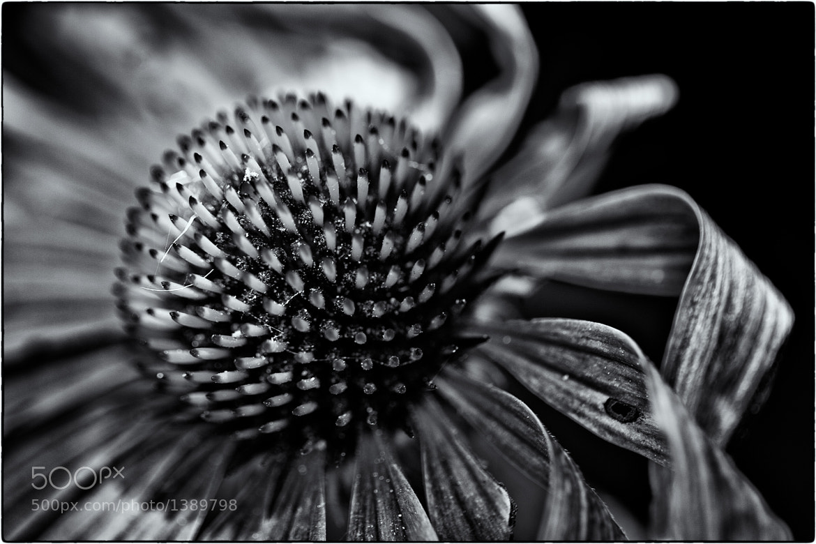 Photograph Flower by Gary Petersen on 500px