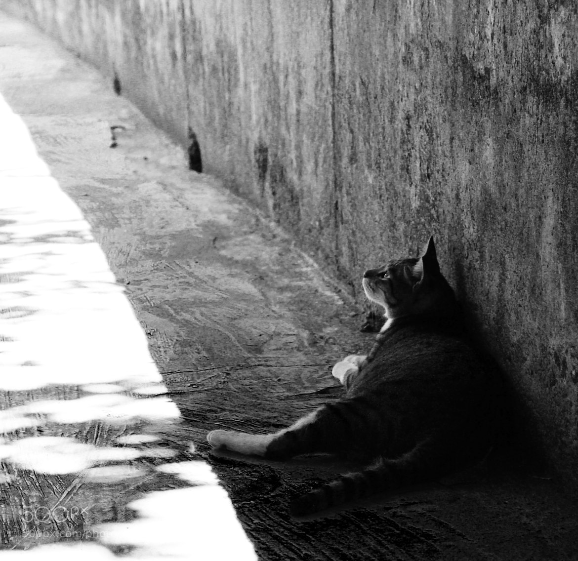 Photograph The cat. by 方競 許 on 500px