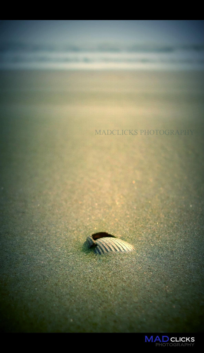 Photograph Shell by Athul Mk on 500px