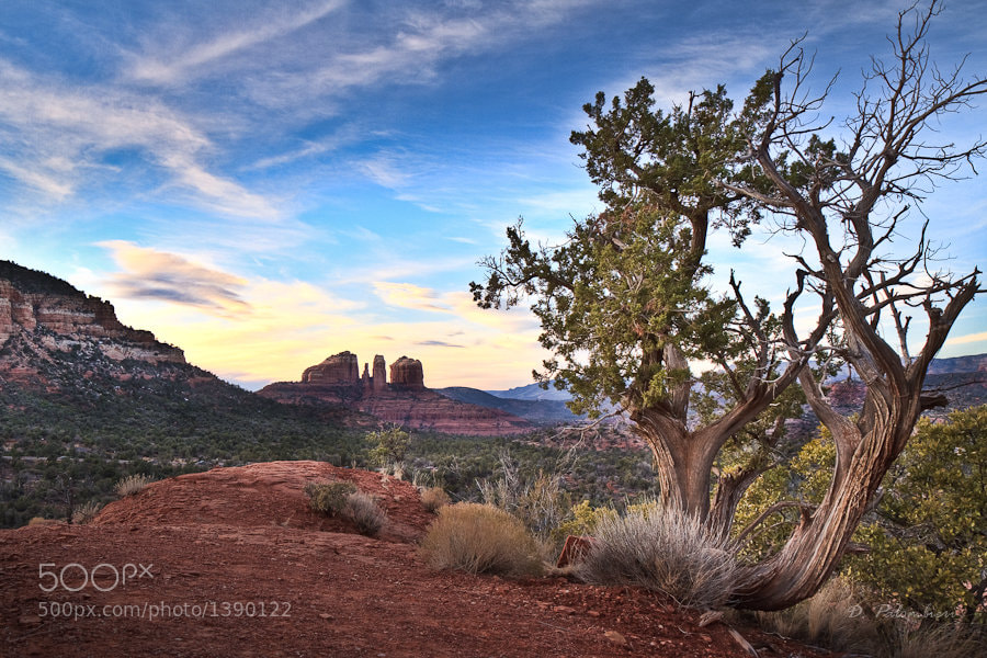 Photograph Cathedral Rock  - Sedona - Arizona by Dominique  Palombieri on 500px