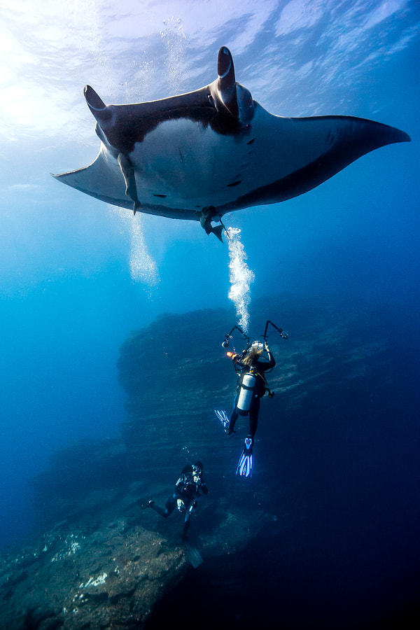 Giant Manta playing with divers by Carlos Grillo on 500px.com