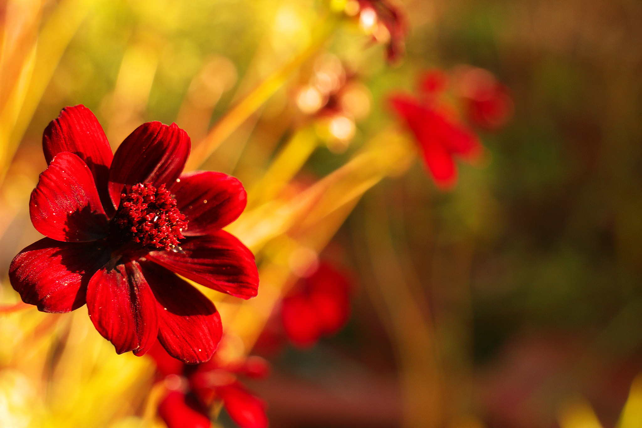 Photograph FLOWERPOWER 1 by Roland Haßler on 500px