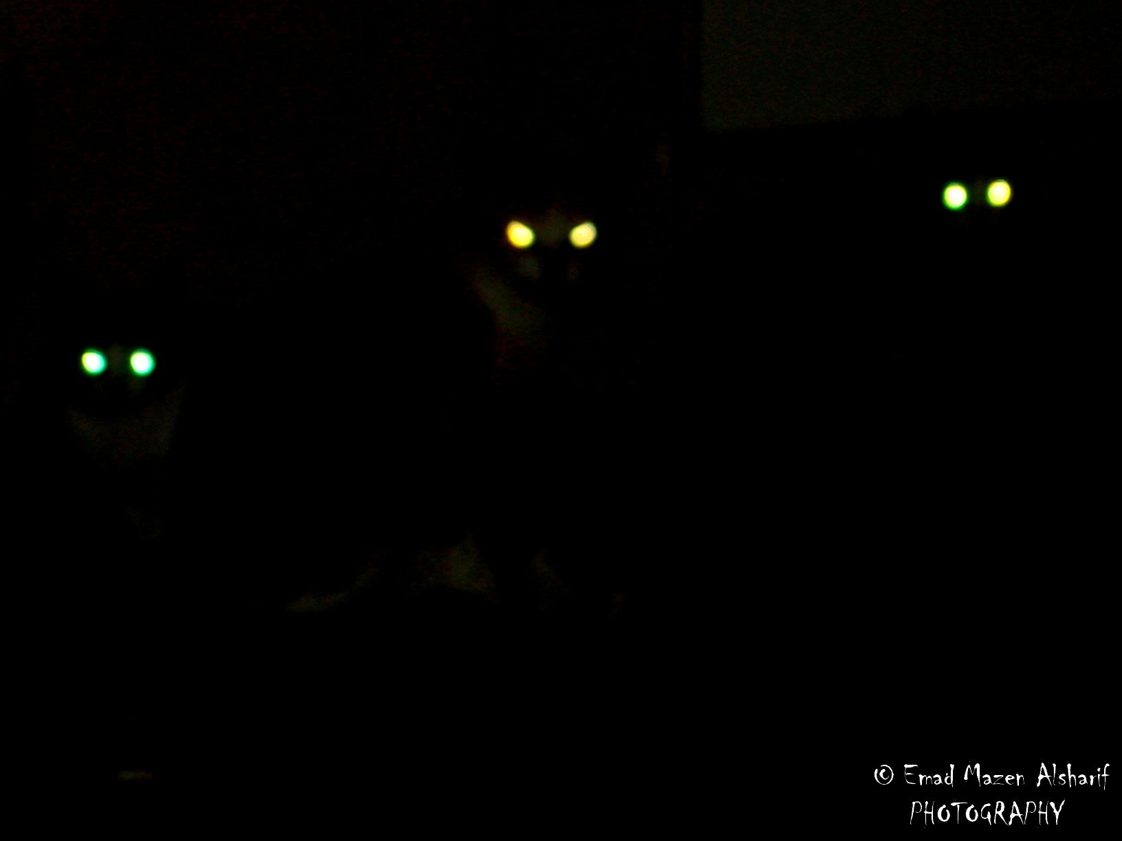 Photograph Cats in Dark ! by Emad Alsharif on 500px