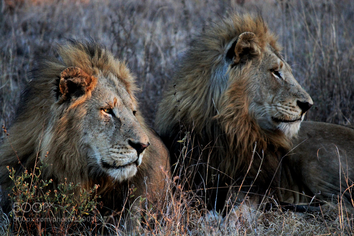 Photograph Brothers by Rachelle Palmer on 500px