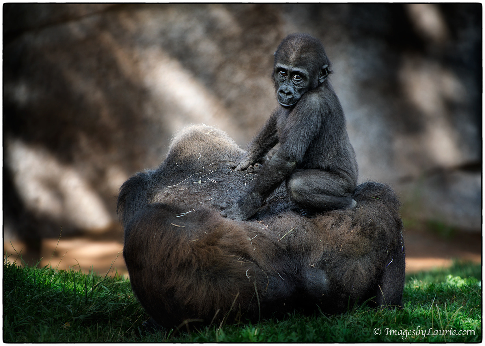 Photograph Gorilla Sofa by Laurie Rubin on 500px
