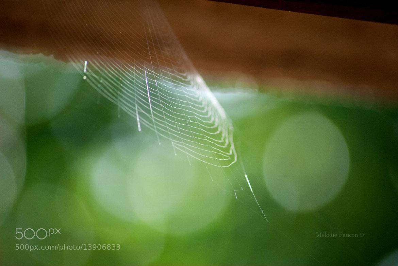 Photograph Toile d'araignée  by Mélodie Faucon on 500px