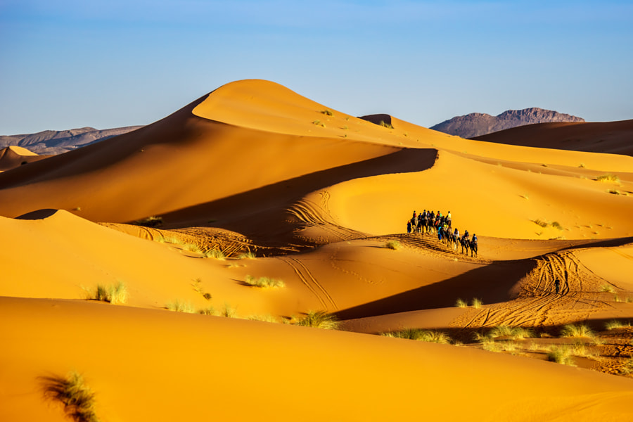 A Caravan in the Desert by Thomas Risse on 500px.com