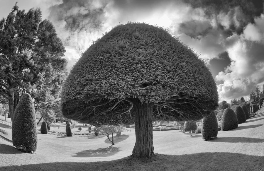 Manicured tree
