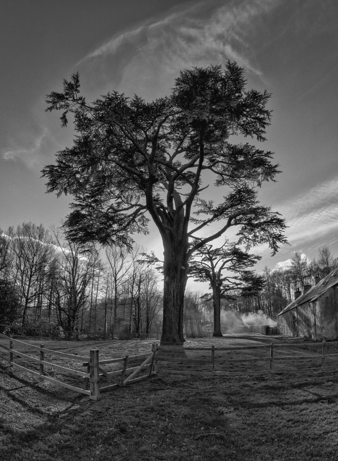 Dalkeith Country Park Tree