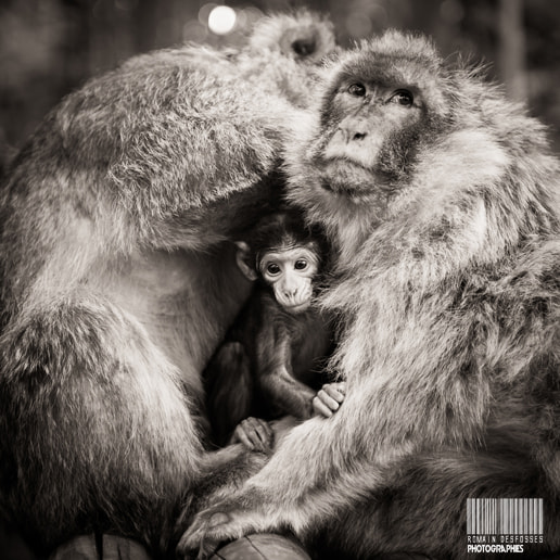 Photograph Little monkey by Romain Desfosses on 500px