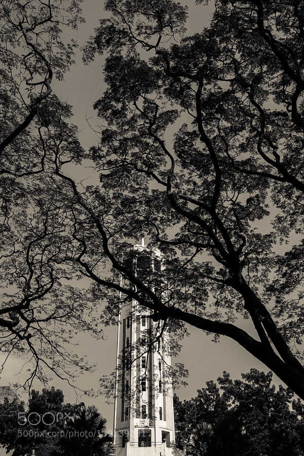 Carillon, UP Diliman, January 2016
