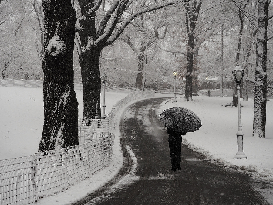 Strolling in the Snow by Nancy Lundebjerg on 500px.com