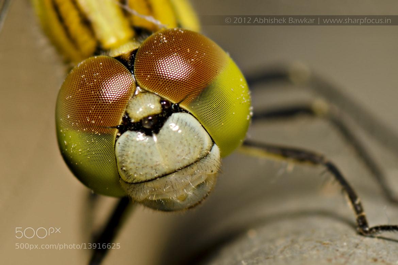Photograph Dragonfly by Abhishek Bawkar on 500px