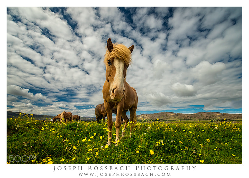 Photograph You Talking to Me by Joseph Rossbach on 500px