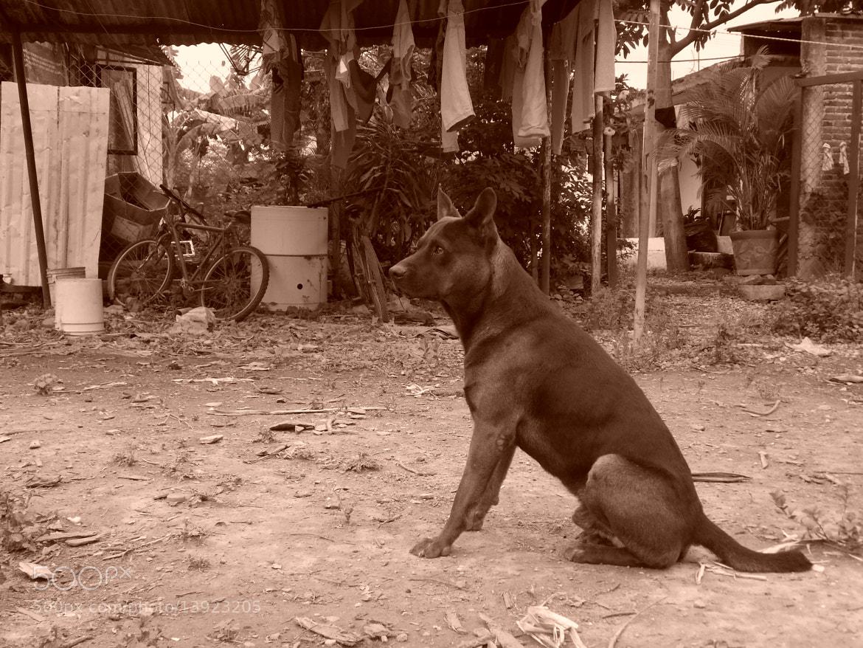 Photograph Rambo by Jehú Camacho on 500px