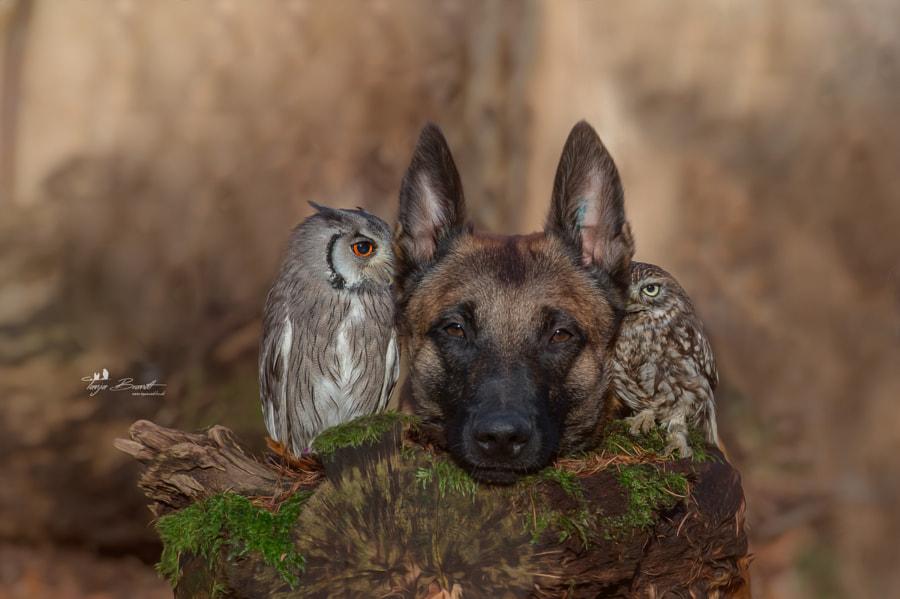 Friends, автор — Tanja Brandt на 500px.com