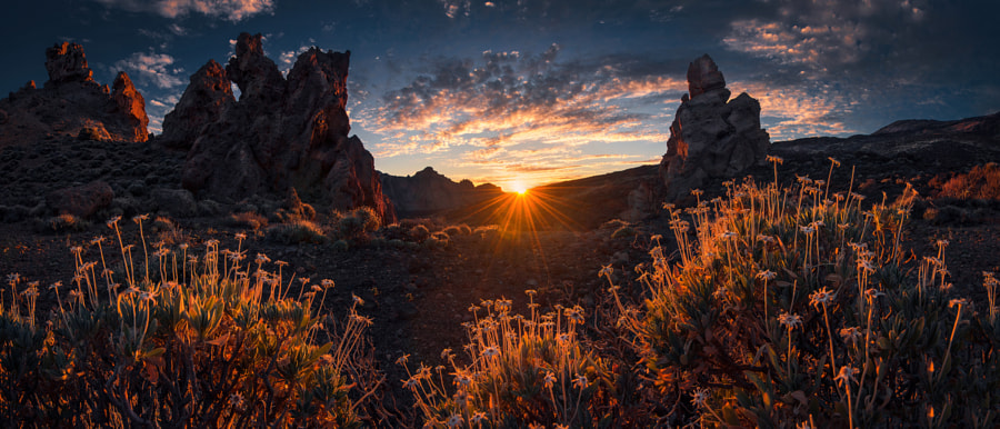 Tenerife by Max Rive