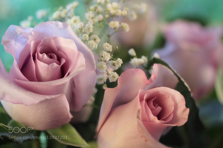 Photograph Moon Fleur ~ Luna Rose by Julia Adamson on 500px