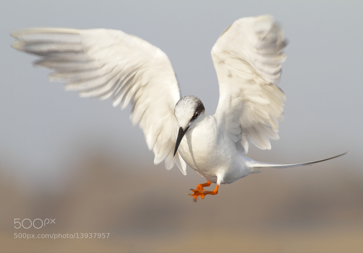 Photograph About to land by Salah Baazizi on 500px