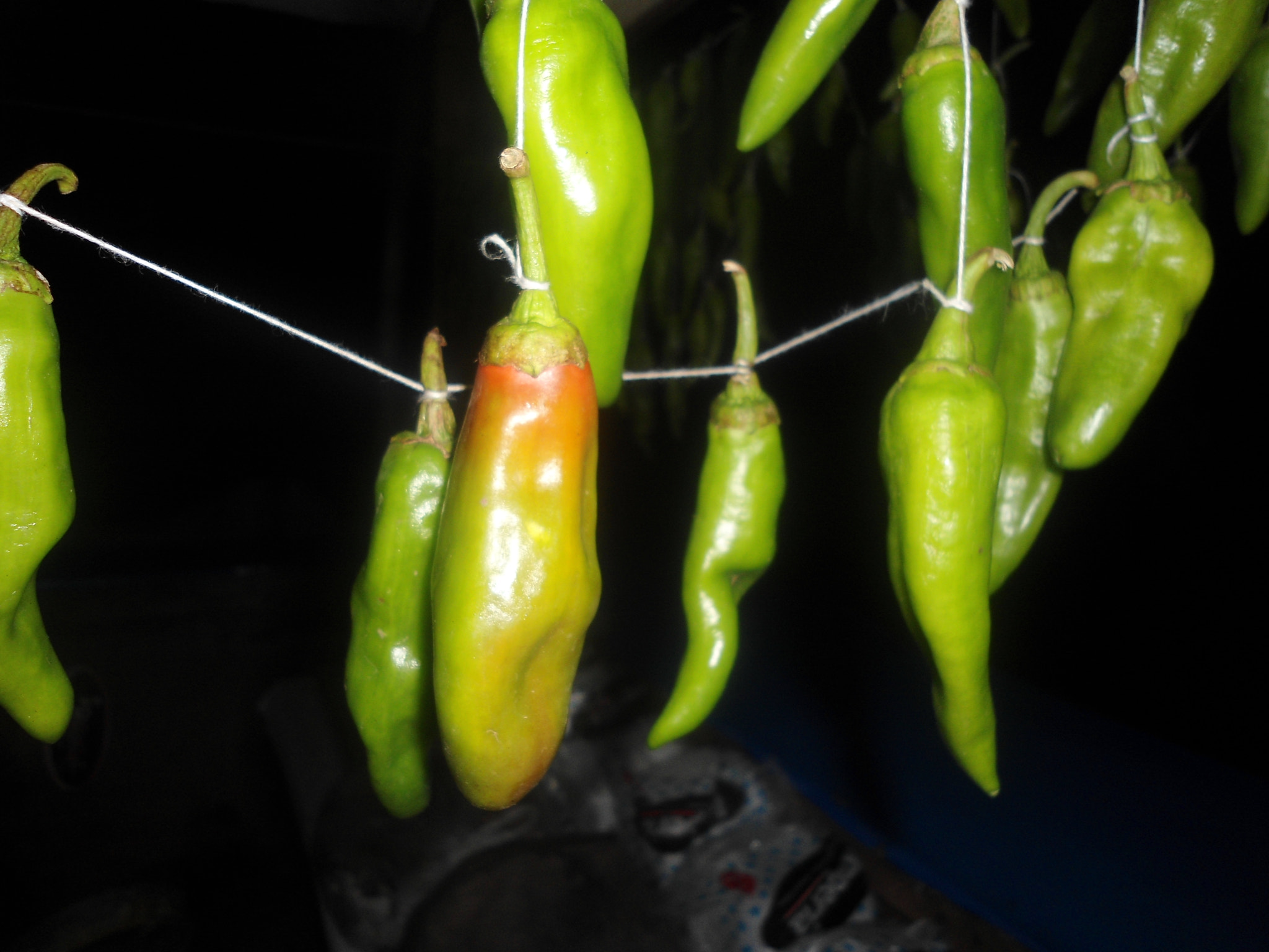 Photograph Indian Chillies in Dark by Shahnawaz Memon on 500px