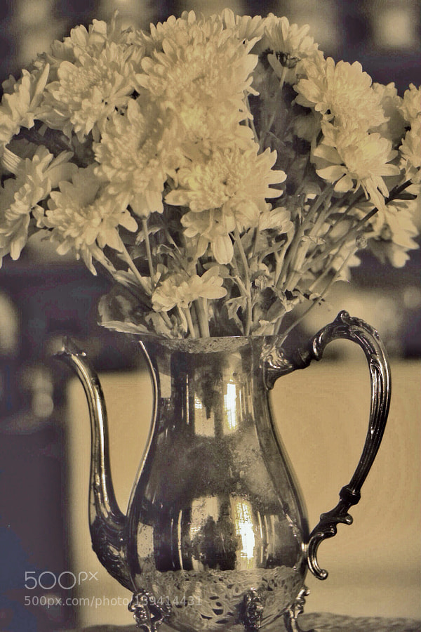 Mums in silver pitcher