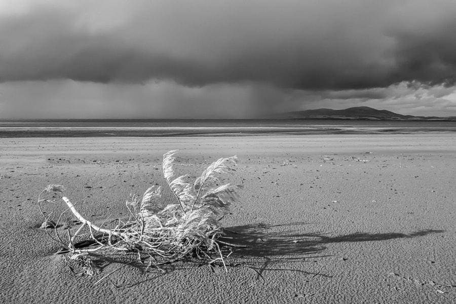 Branch on beach