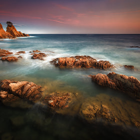 The Last Tree by Esteve Garriga (estevegarriga)) on 500px.com