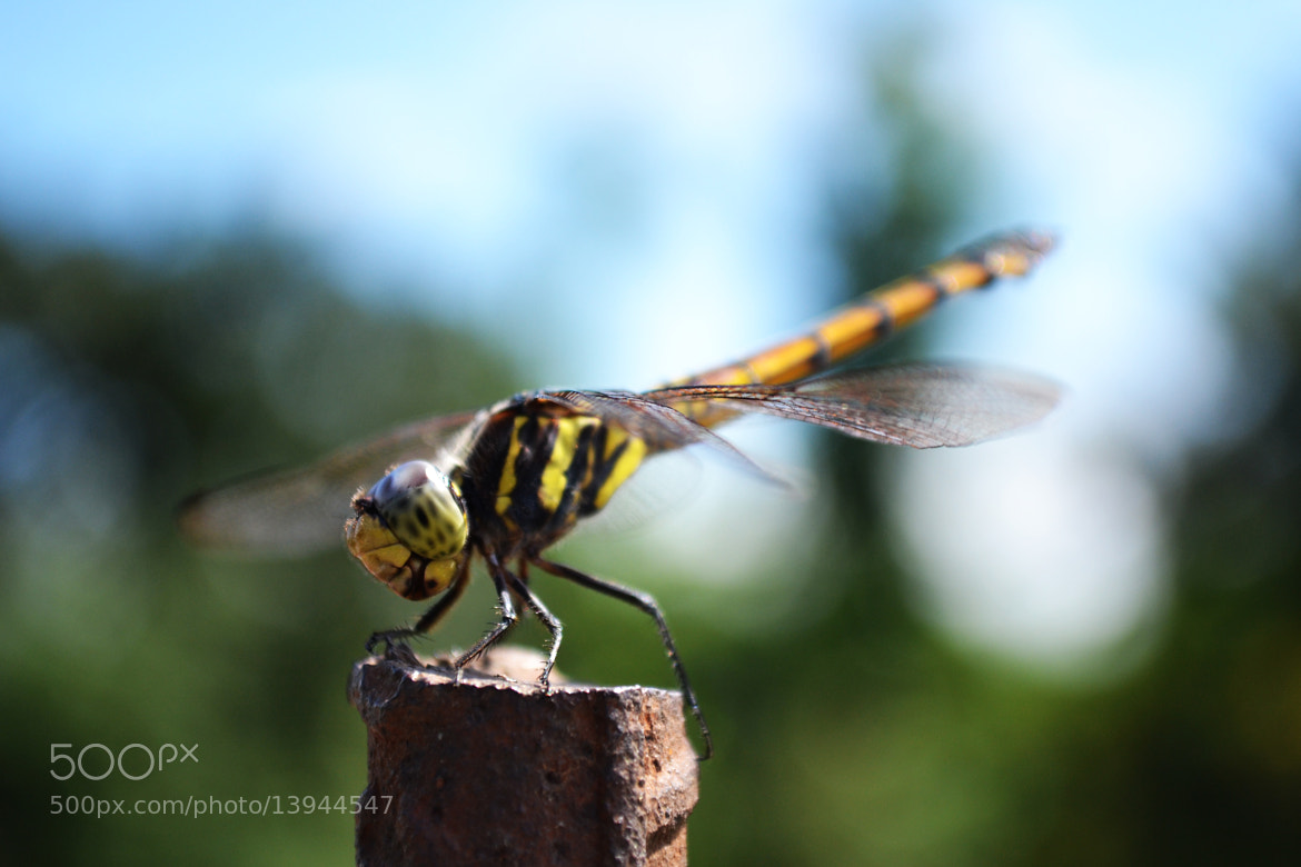 Photograph The Fighter II by Amartya Skk on 500px