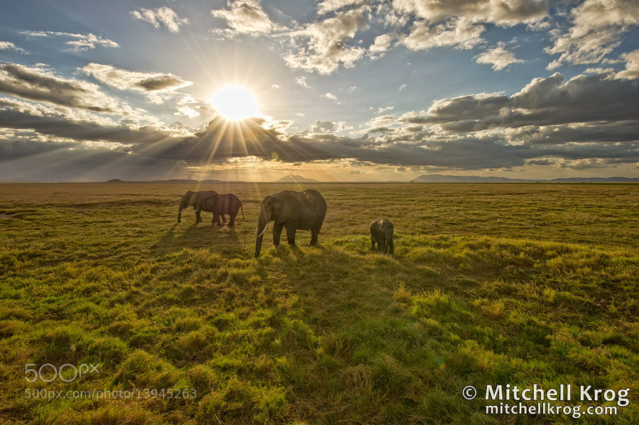 Photograph Elephant Sunset - Amboseli, Kenya by Mitchell Krog on 500px