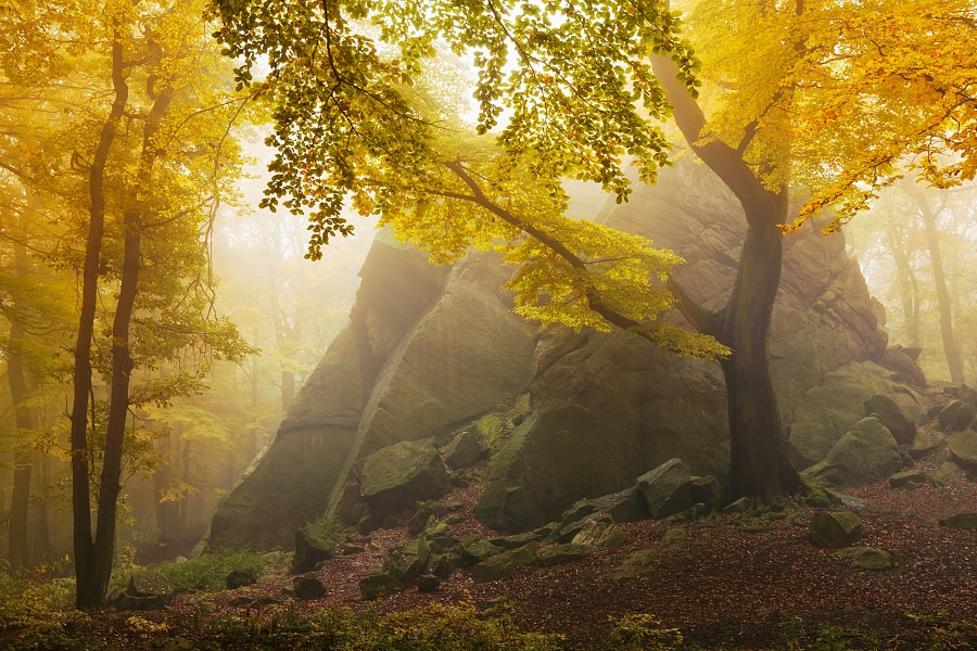 Photograph Autumn forest by Daniel Řeřicha on 500px