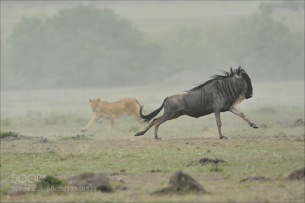Photograph Run Wildebeest, Run! by Elmar Weiss on 500px