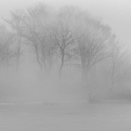Ancient Mist