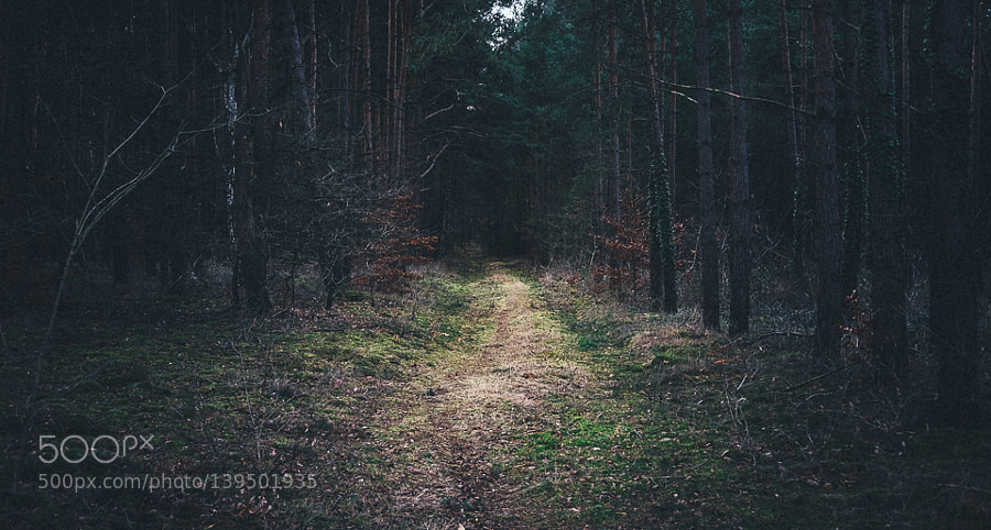 Grimms Wald