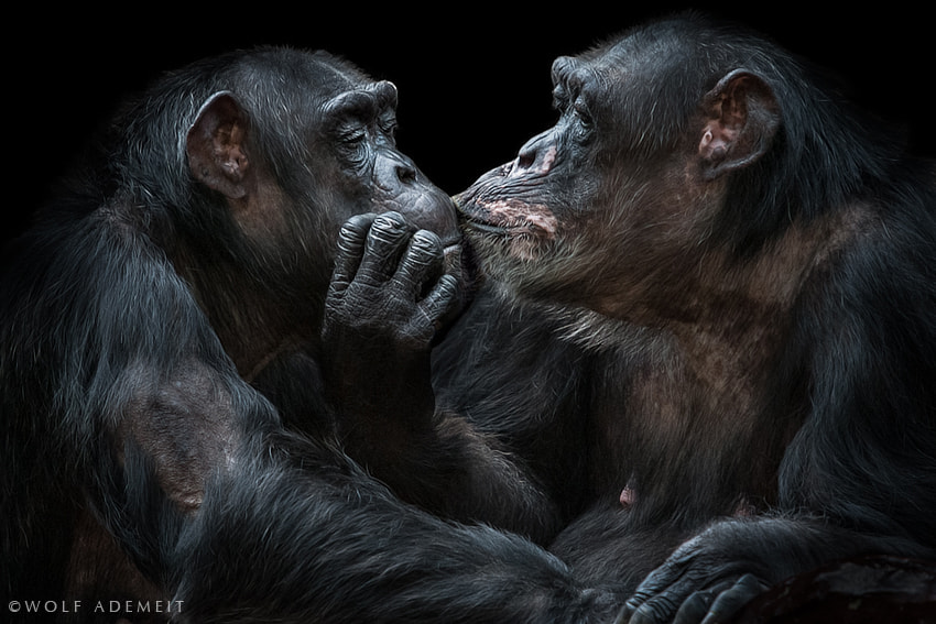 Photograph THE KISS by Wolf Ademeit on 500px