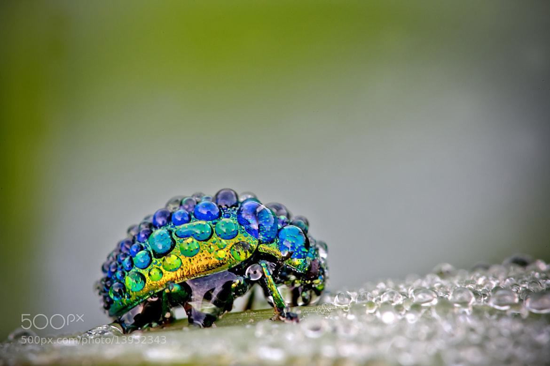 Photograph le porteur d'eau ! by David Chambon on 500px