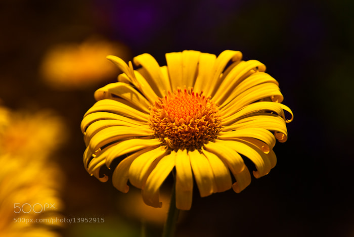 Photograph yellow by Kinga Wystub on 500px