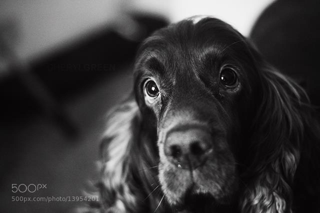 Photograph Barry by Marta Swakowska on 500px