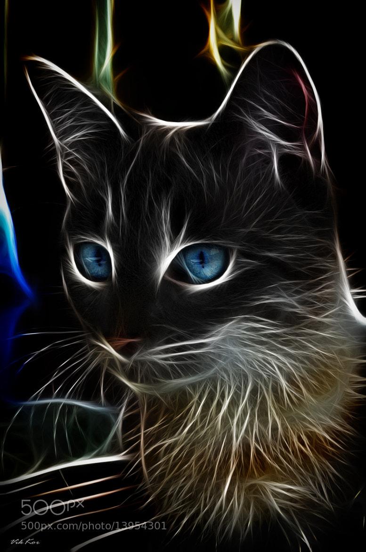 Photograph cat by Viktor Korostynski on 500px