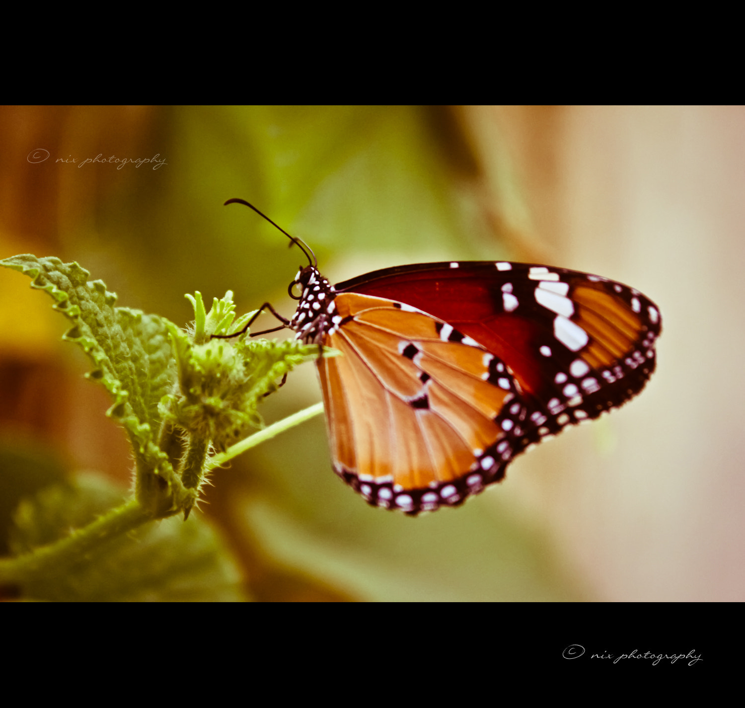 Photograph B'fly by Nithesh Kanth on 500px