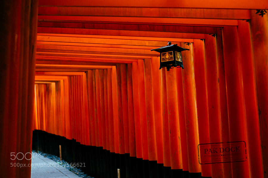 Lamp at Fushimi Inari. Japan