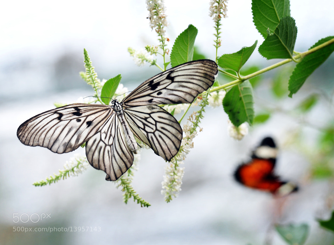 """Photograph """"Beauty Fly"""" by lilie 59 on 500px"""