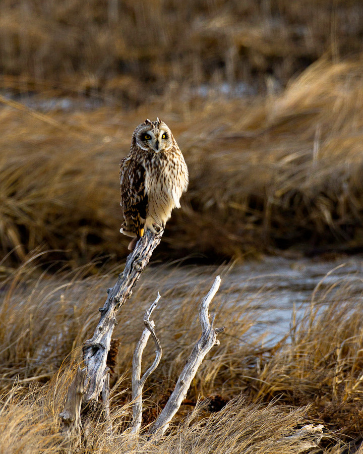 Photograph Watchful Eye by Kelly & Robert Walters on 500px