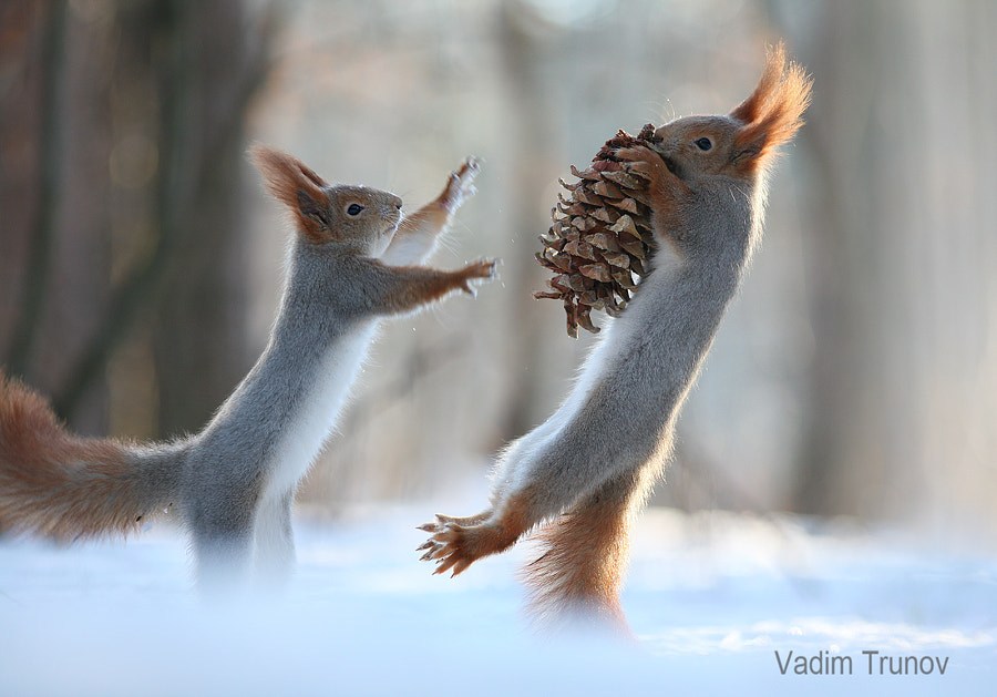 Squirrel Kung Fu by Vadim Trunov on 500px.com
