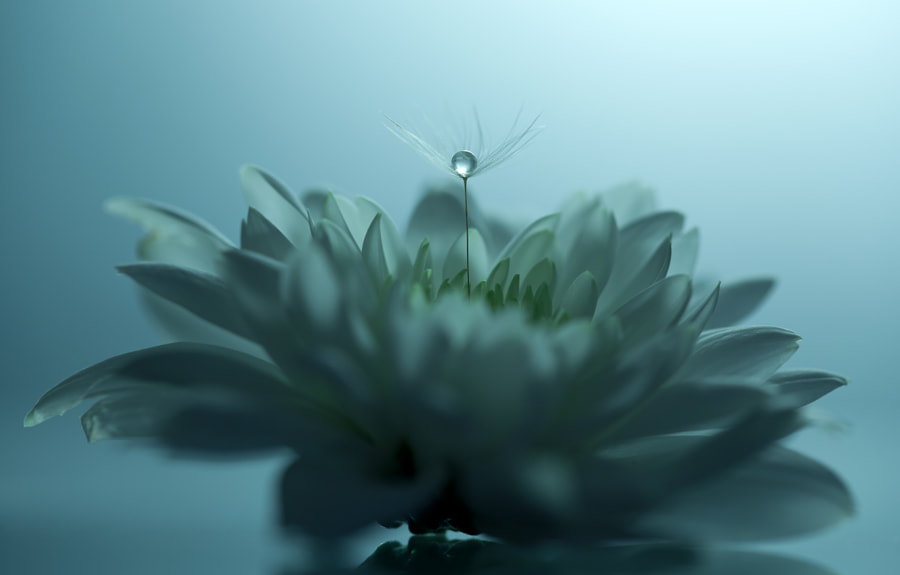 The Flower & The Pearl  by Johannes Dörrstock on 500px.com