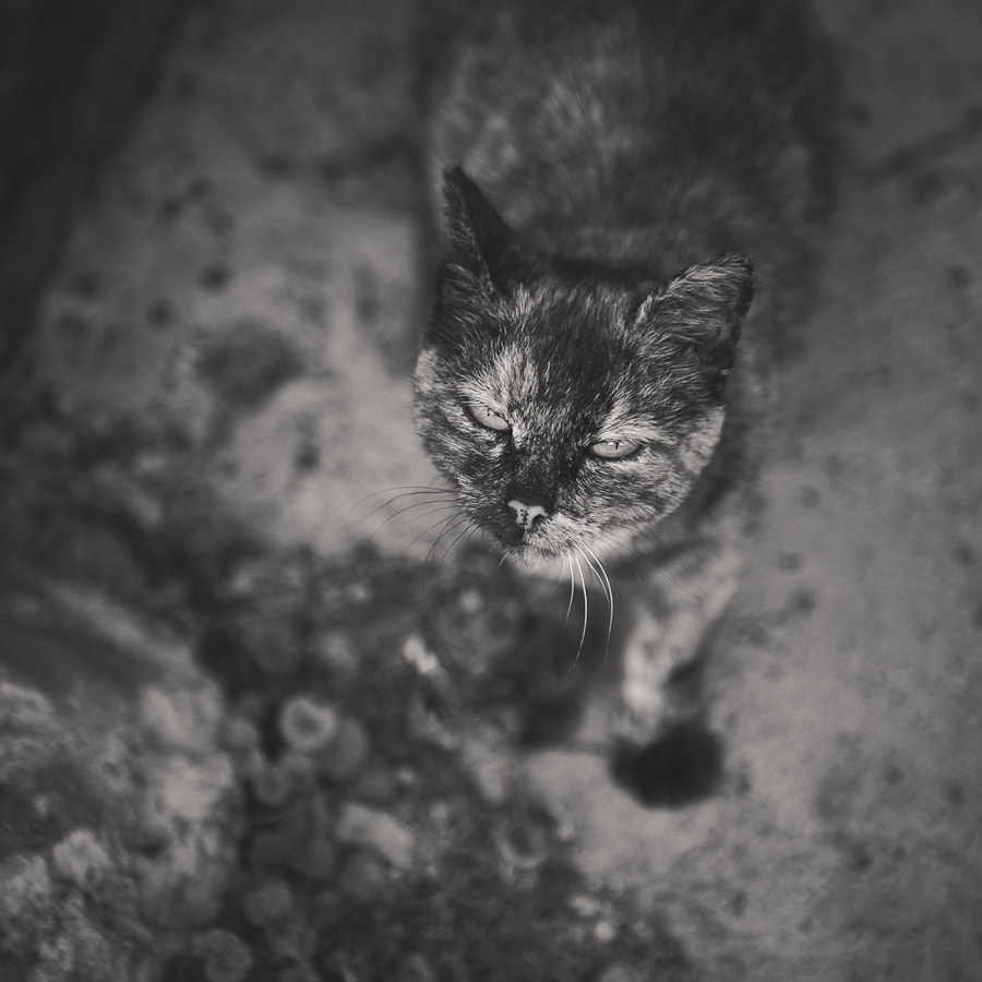Photograph cat by Vitaly Zimarin on 500px