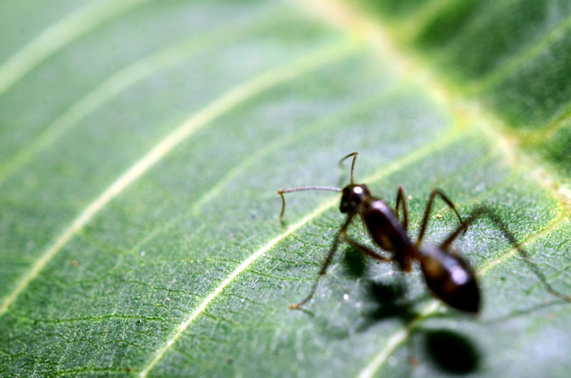 Photograph Ant by Cassius Marcelo on 500px