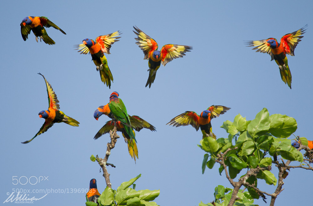 Photograph Colourful Commotion by William Nguyen-Phuoc on 500px