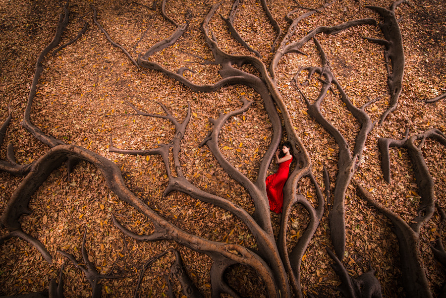 Roots Birth by Julien Orre on 500px.com