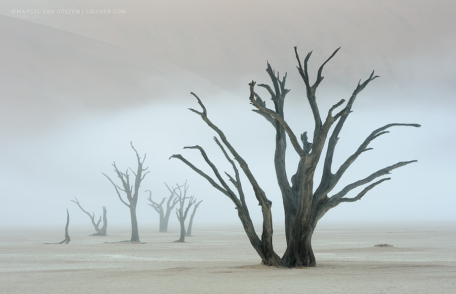 The Veil Redux by Marsel van Oosten on 500px.com